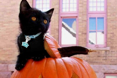 20 Black Cats That Think Every Day is Halloween