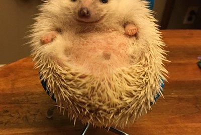22 Hedgehogs That Will Make You Wish You Had a Hedgehog