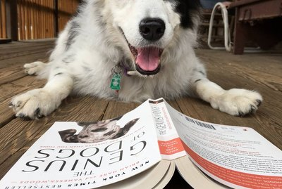Is This The Smartest Dog in the World?