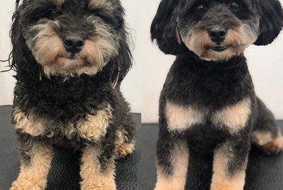"17 Dogs Before & After Their ""Spaw"" Days"