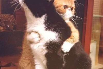 24 Photos & GIFs Of Cats Hugging Other Cats That Will Squish Your Heart