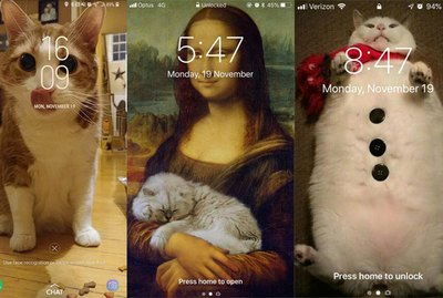 28 of the Best Cat Lock Screens Ever