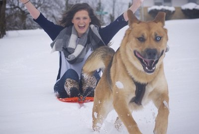 20 Dogs Who Love Snow So Flipping Much