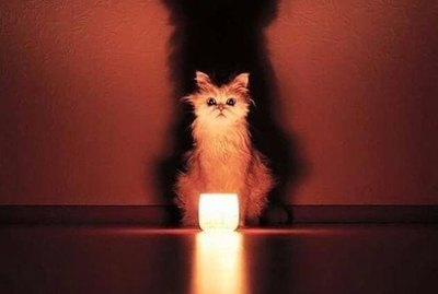 25 Cats With Wicked Powerful Auras