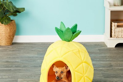 Cuteness Picks: The 7 Pet Products We're Stanning This Week