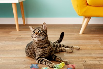 Cuteness Picks: 7 Super Simple Toys For The Discerning Cat