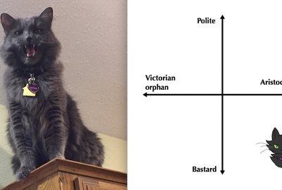 People Are Graphing Their Cats Onto This Axis And We Can't Stop Laughing