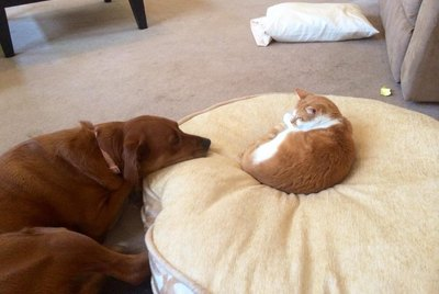 16 Dogs Annoying Cats With Their Friendship