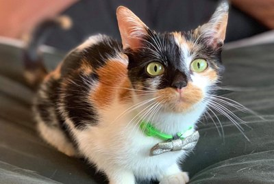 160 Names For Your Calico Cat