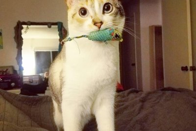 21 Amazing Cats Who Are Making Fetch Happen