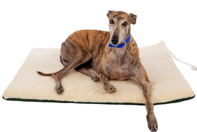 The 6 Best Beds For Senior Dogs