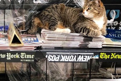21 Hardworking Shop Cats