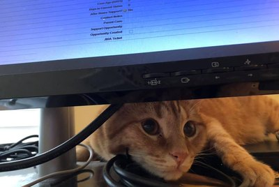 17 Pets Who Absolutely Will Not Let You Get Any Work Done