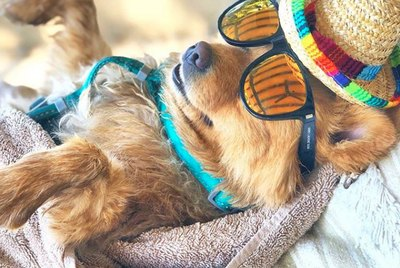 16 Dogs Living Their Best Lives on Vacation