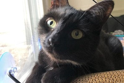 20 Photos That Prove Black Cats Are Magic
