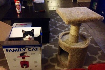 19 Totally Ungrateful Cats