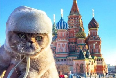 121 Russian Cat Names