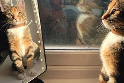 People Are Sharing Their Favorite Cat Pictures & It's Too Pure