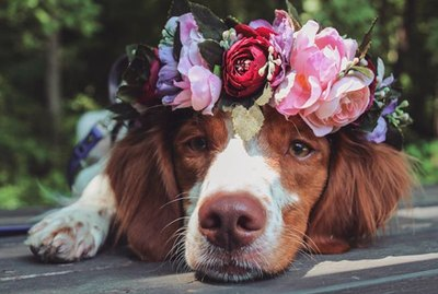Just 18 Dogs Looking Pretty In Flower Crowns