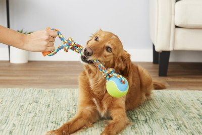 Cuteness Picks: 7 Rope & Tug Toys For High Key Chewers & Chompers