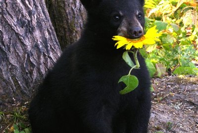 23 Times We Wished Bears Made Good Pets