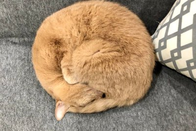 18 Perfectly Baked Cat Buns