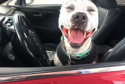 18 Dogs Going On A Heckin Good Car Ride