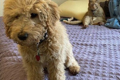 24 Dogs Who Are Totally Oblivious the Cats They Live With Hate Them