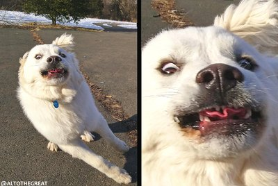 20 Dogs Who Just Can't Contain Their Excitement