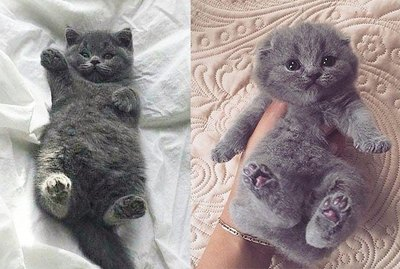 Stop Everything And Look At These 15 Chubby Kittens Right Meow!