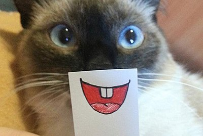 People Are Giving Their Cats Cartoon Makeovers & We Can't Stop Laughing