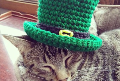 Find Gold At The End Of The Rainbow With These 230 Irish Cat Names