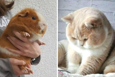 17 Chubby Baby Animals Who Just Can't Wait For Dinner