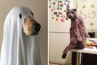 16 Cats Who Just Saw A Ghost