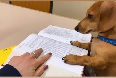 17 Pets Doin Themselves A Study