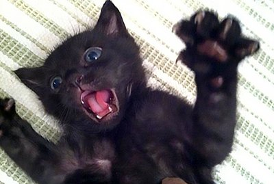 16 Kittens Who Are Still Learning How To Cat