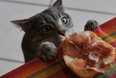 15 Very Sneaky Cats And Dogs