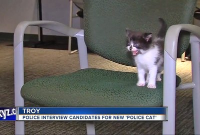 Michigan Police Department 'Interviews' Kittens For Very Important Job