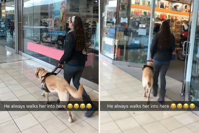 Mischievous Guide Dog Keeps Rerouting His Human To Pet Supply Shop