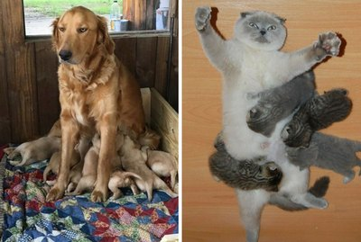 21 Animal Parents Who Are Just Doing Their Best, Okay