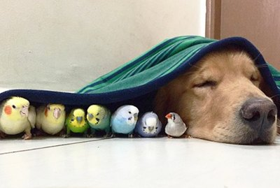21 Of The Internet's Sweetest Bird Friends