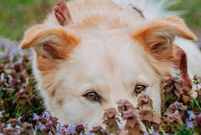 18 Dogs Who Remembered To Stop & Smell The Flowers