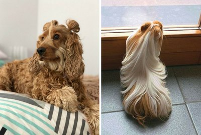 These 16 Pets With Gorgeous Hair Will Make You Ask 'What's Her Secret?'