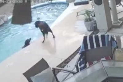 Brave Pup Dives Into Backyard Pool To Rescue Four-Legged Bestie