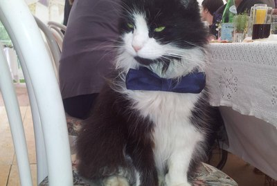 17 Pets You Shouldn't Invite To Your Wedding
