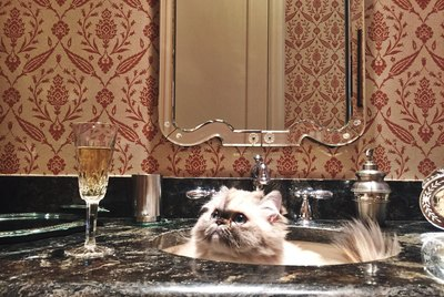 16 Cats Who Think They're On A Reality Show