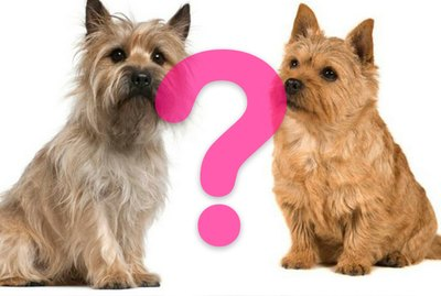 Can You Tell The Difference Between These 18 Dog Breeds?