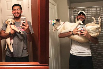 People Are Sharing Pictures Of Their Pups All Grown Up And It's Mad Cute