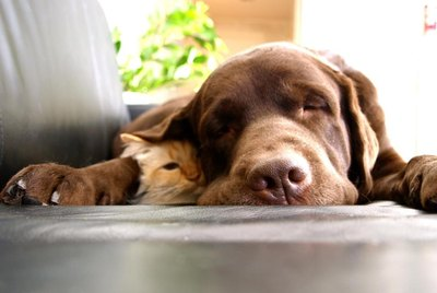 19 Sweet And Silly Cats And Dogs
