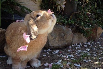 21 Bunnies That Will Hop Right Into Your Heart